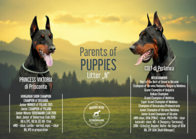 Parents of puppies